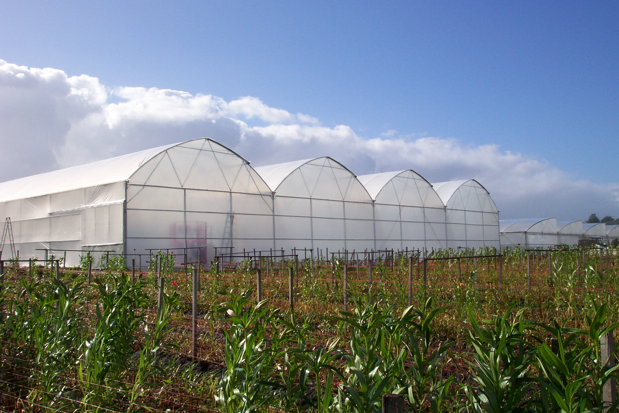 david gill greenhouses your passion is our obsession
